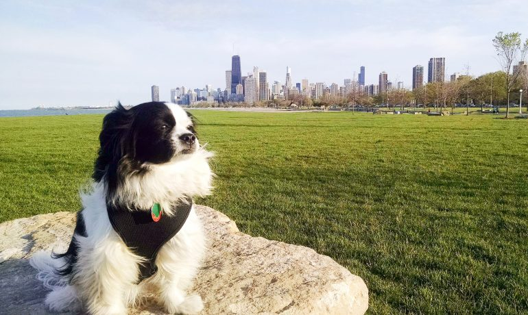 This post by Leah Nolan of the Chicago Chic features the best casual spots in Chicago to dine with dogs.